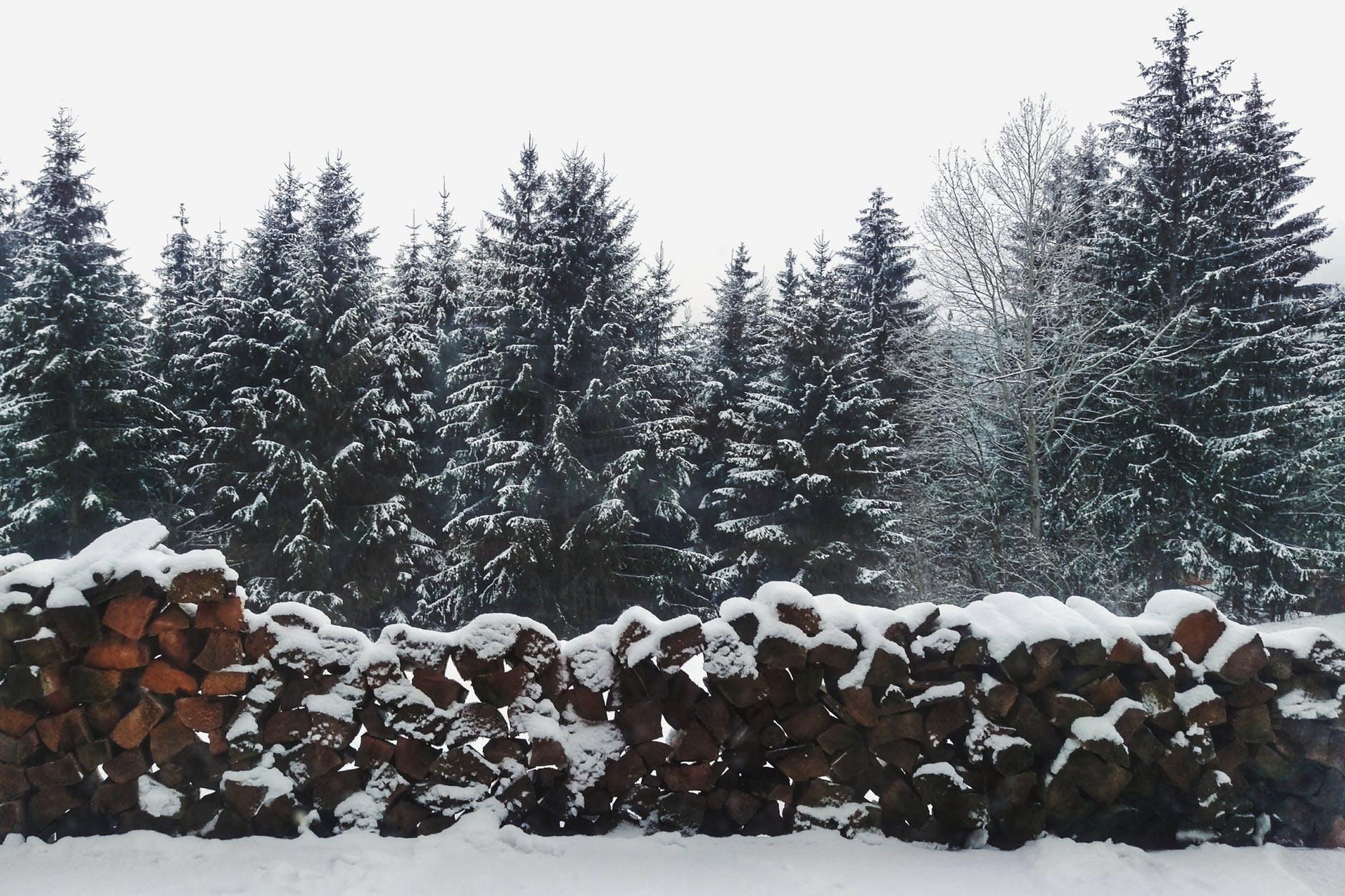 Christmas trees live farms